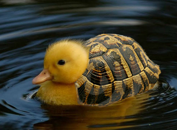avatarverse__turtle_duck_by_smiling_fox-w700