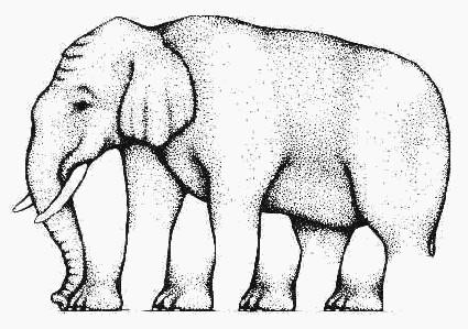 فیل چند پا دارد؟