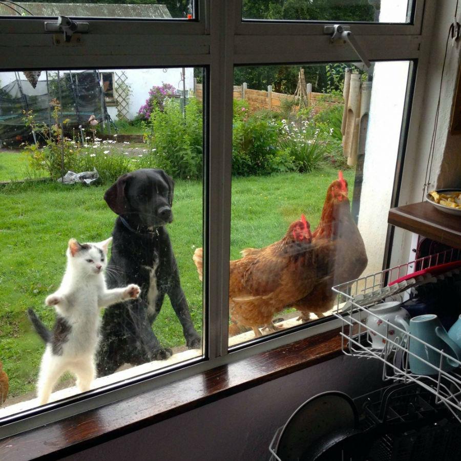 این حیوانات به چه چیزی این طور با دقت نگاه می کنند؟