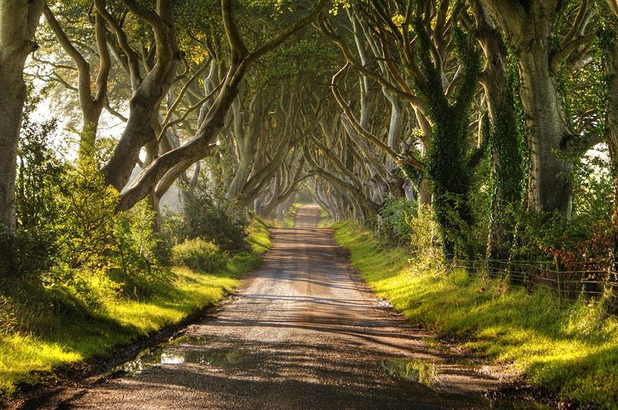 کوچه ای از درختان راش - ایرلند شمالی