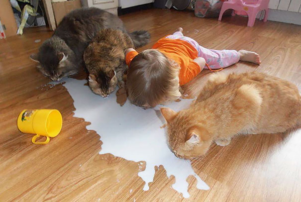 کودکان در همنشینی با حیوانات خانگی تصور می کنند که آن ها نیز یک حیوان ملوس خانگی هستند.