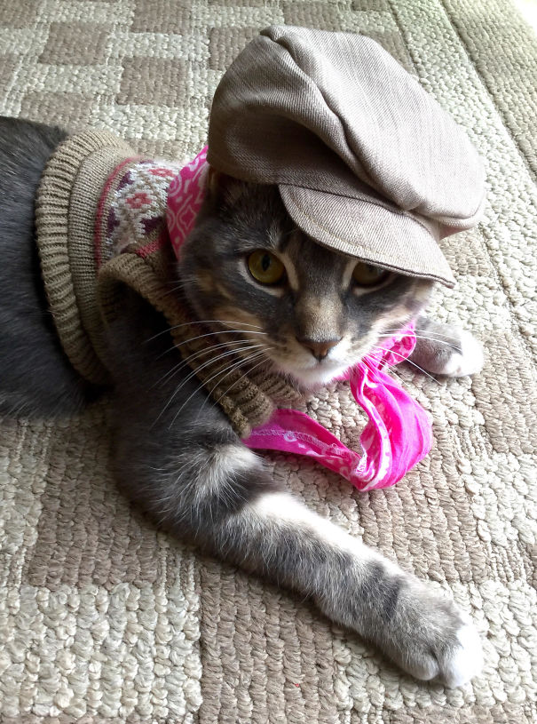لباس پوشاندن گربه خانگی توسط کودک 5 ساله