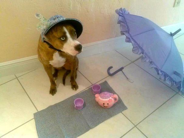 خاله بازی با سگ