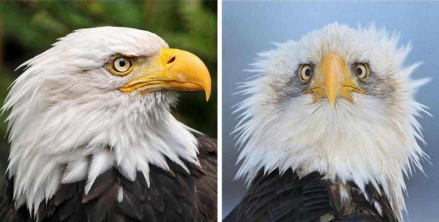 با این عکس متوجه خواهید شد که چرا همیشه از نیم رخ عقاب عکاسی می شود.