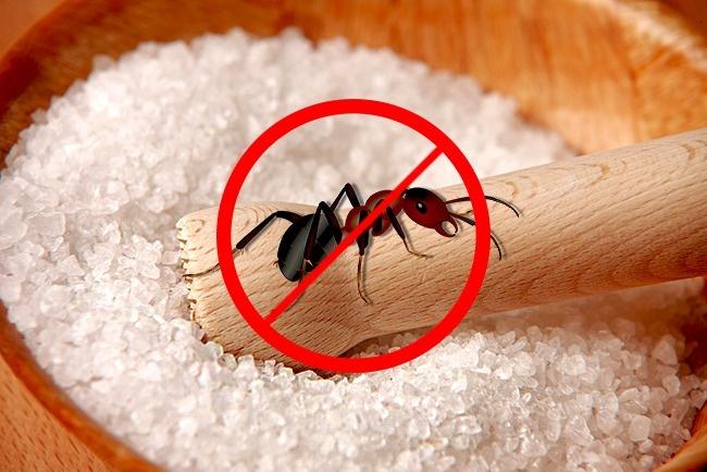 دور کردن مورچه ها: برای این منظور می توانید نمک و آب را با نسبت یک به 4 با یکدیگر مخلوط کرده و در محلی که تصور می کنید، مورچه ها در آن اجتماع می کنند، اسپری کنید. یا حتی می توانید کمی نمک خشک در آن مکان بپاشید.