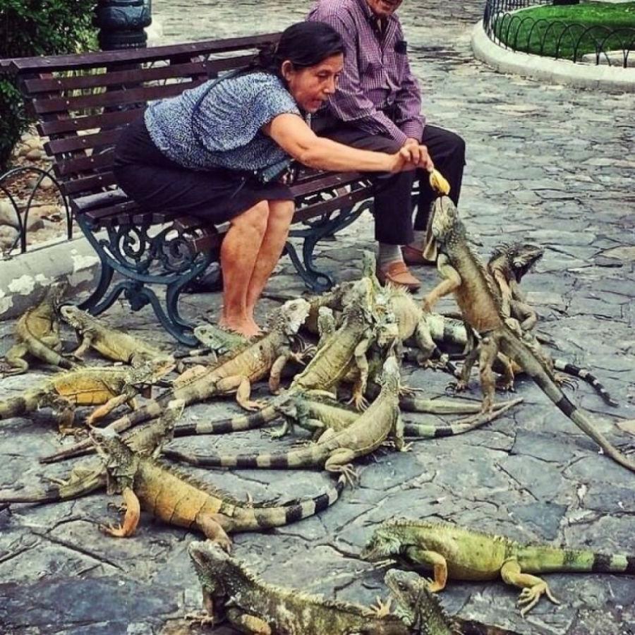 غذا دادن به «پرندگان»! در اکوادور در پارک