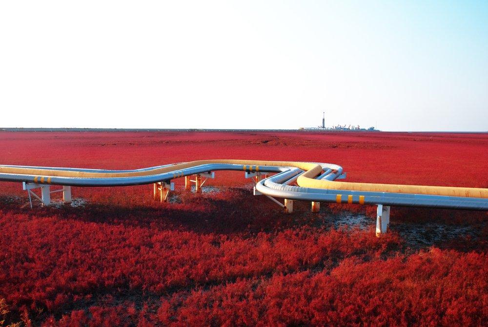 ساحل قرمز در کشور چین، مرداب آلاینده ای است که رنگ خود را به واسطه رشد جلبک های Sueda دارد یکی دیگر از چشم اندازهای عجیب و جالب توجه در دنیا است. این جلبک ها در فصل پائیز قرمز لاکی می شوند.