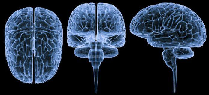 brain-enhancing-compressed-696x316-w700