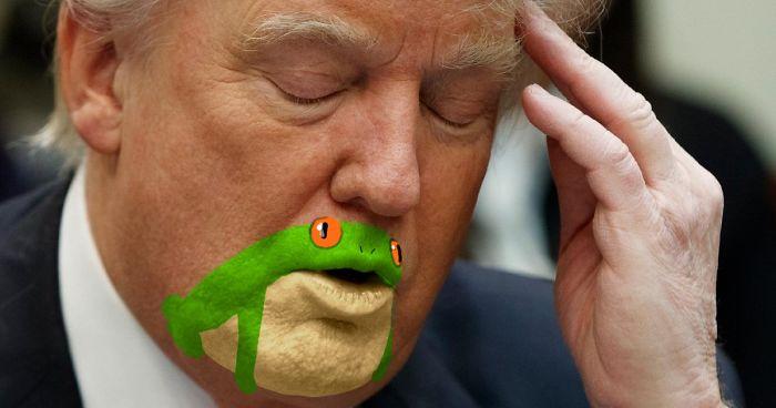 وقتی کاربران توئیتر دهان دونالد ترامپ را به قورباغه سبز درختی تشبیه می کنند