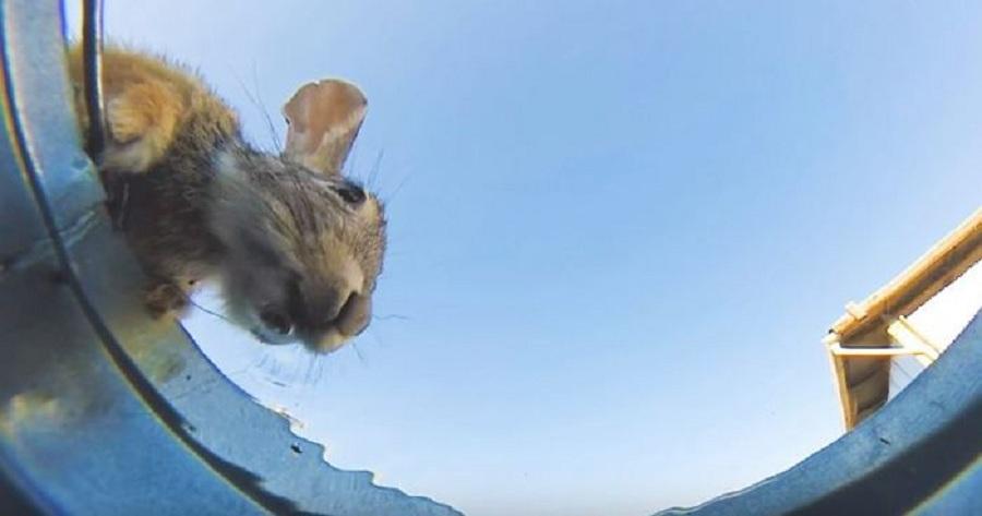 دوربین مخفی متفاوت و دیدنی از آب خوردن حیوانات مختلف [تماشا کنید]