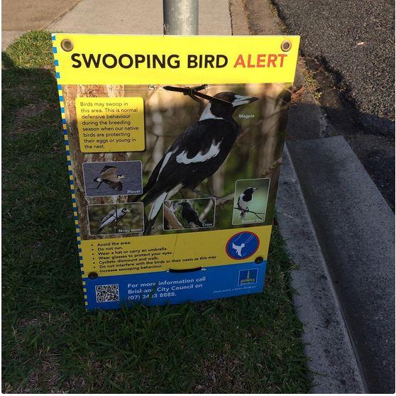 وقتی شهرداری مجبور می شود برای آگاهی مردم از حمله پرندگان، تابلوهای هشدار در سطح شهر نصب کند.