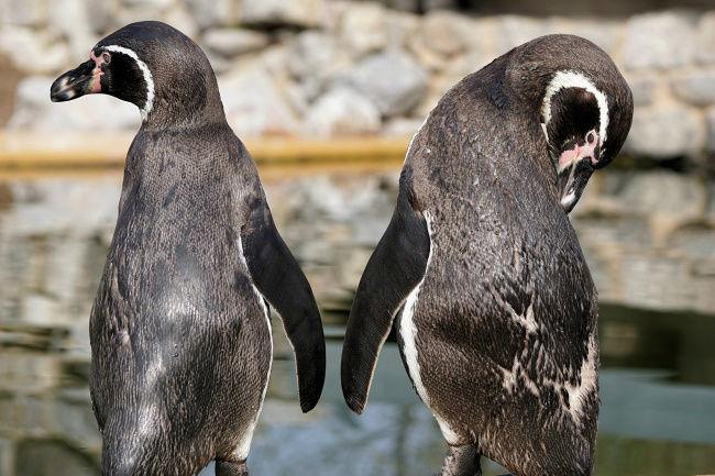 14212860-penguin-2204569_1920-1493988547-650-86a503cbbe-1494232807-w700