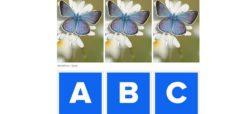 چالش: آیا تفاوت موجود در بال های پروانه های زیر را می توانید تشخیص دهید؟