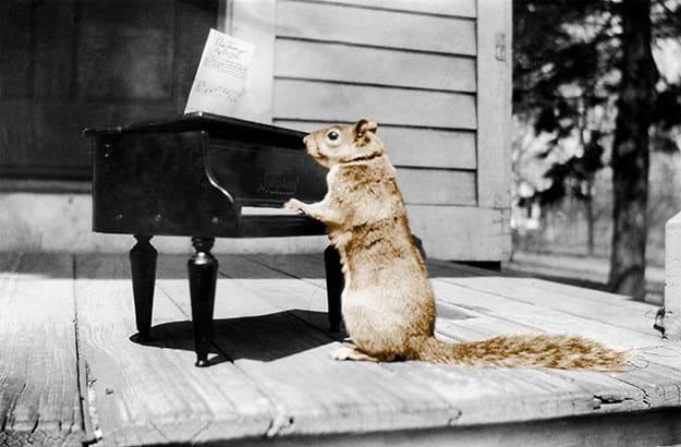 در قرون 18 و 19 میلادی، سنجاب ها، حیوان خانگی قشر متمول جامعه به حساب می آمدند اما از آن جا که این حیوان ذات تعلیم ناپذیر دارد، بیشتر مایه دردسر بود تا اینکه سرگرم کننده باشد. به همین خاطر، پیش از قرن بیستم، این محبوبیت از بین رفته و کمتر کسی به خرید و نگهداری از سنجاب ها اقدام می کرد.