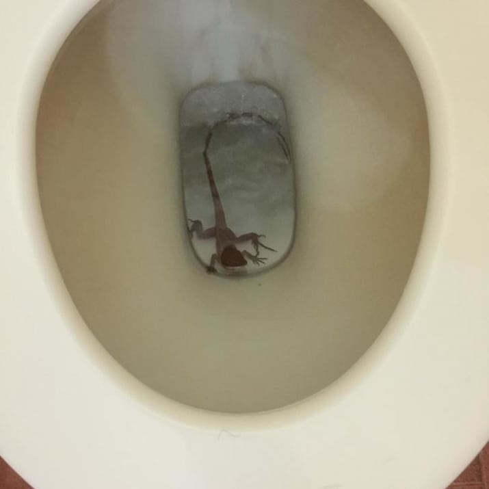 این مارمولک هم گویا توالت را به طبیعت ترجیح داده است