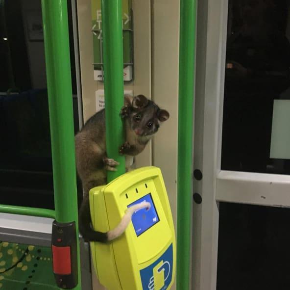 همزیستی حیوان و انسان در فضای شهری