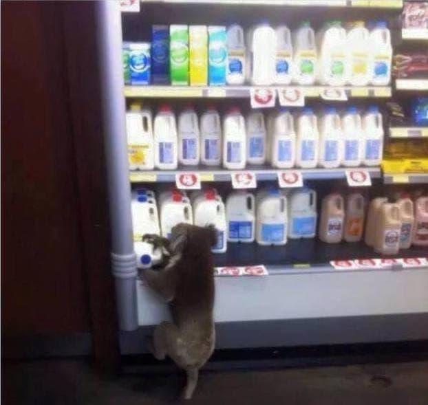 ایشان هم فقط یک بطری شیر نیاز دارند.
