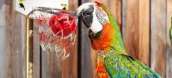 ۱۰ رکورد شگفت انگیزی که تا کنون توسط حیوانات به ثبت رسیده است