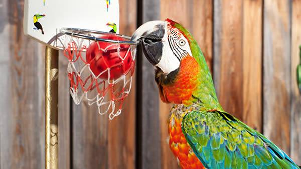 اسلم دانک برای انسان ها هم چندان آسان نیست چه برسد به پرنده ای همانند طوطی. «زاک»، یک طوطی 25 ساله است که جولی و اد او را آموزش داده و قادر است با سرعت زیاد بسکتبال بازی کرده و در یک دقیقه چندین بار توپ را درون تور بیندازد. افراد یاد شده در طول 22 سال گذشته، انواع حرکات ورزشی و نمایشی را به طوطی خود آموخته اند که از جمله می توان به اسکوتر، اسکیت برد، بلند کردن پرچم و ... اشاره کرد. این طوطی علاوه بر اسلم دانک، برای باز کردن بیشترین درب قوطی سودا در عرض یک دقیقه نیز نامش در گینس ثبت شده است.