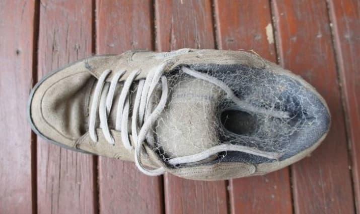کفشی که به تصرف عنکبوت ها در آمده است