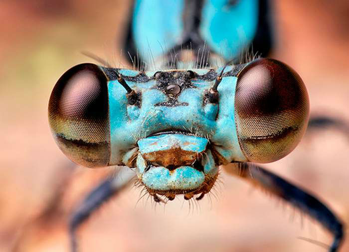 Macro-Photography-of-Insects-eyes-1-w700