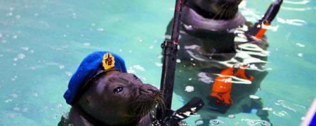 Russian-Navy-SEALS-Header-Ripleys-w700