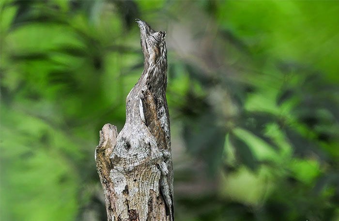 amazing-wild-animal-camouflage-nature-203-5926e192e9737__700-w700