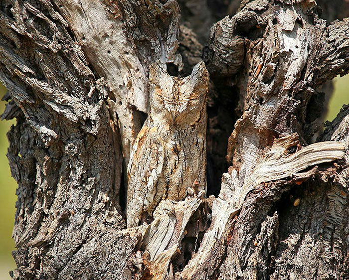 amazing-wild-animal-camouflage-nature-8-59258edad4f22__700-w700