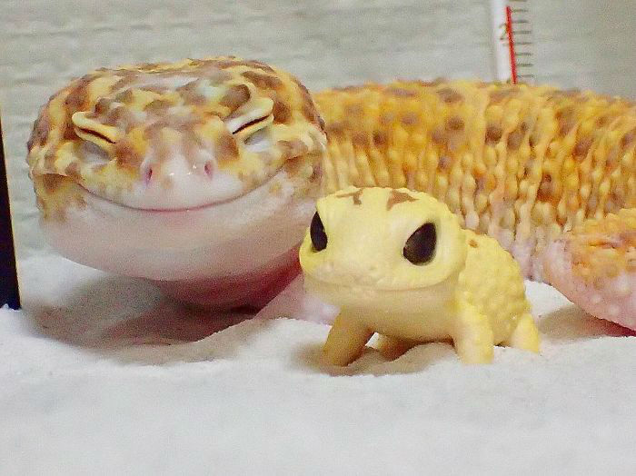 cute-happy-gecko-with-toy-kohaku-24-591e9c6e0b156__700-w700
