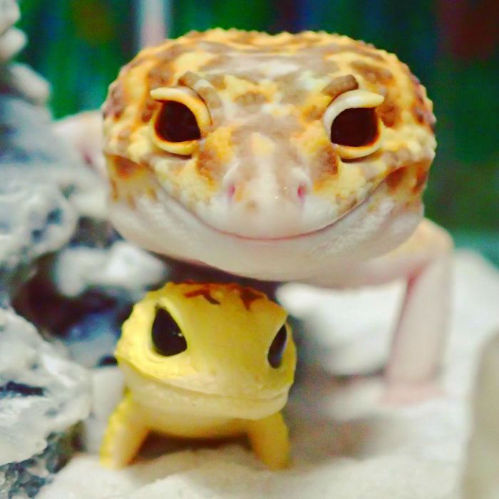 cute-happy-gecko-with-toy-kohaku-5-591e9c3dce145__700-w700