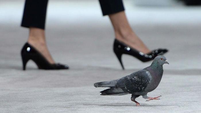 ecstasy-drug-smuggling-pigeon-iraq-kuwait-5926d9958bdec-png__700-w700