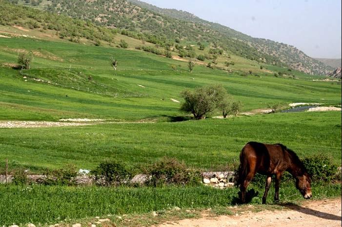 کوهستانهای سرسبز استان لرستان