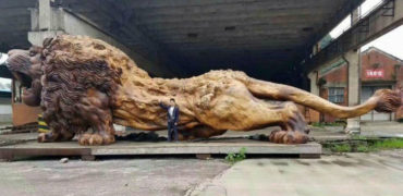 lion-carved-from-single-tree-trunk-by-dengding-rui-yao-12-w700