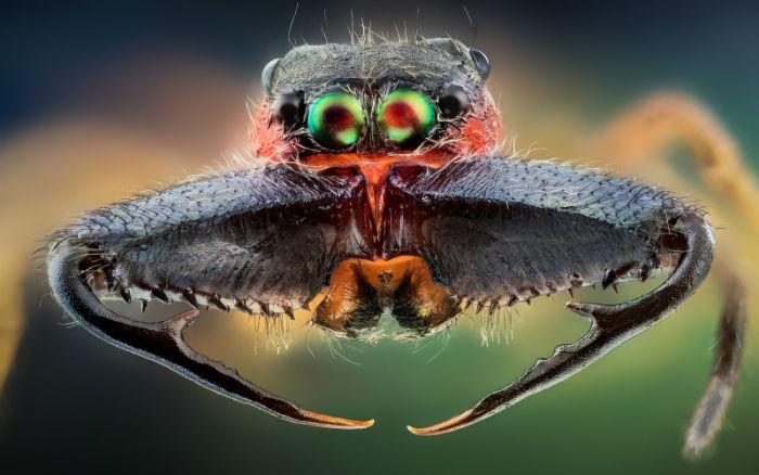 macro-insects-hq-john-hallmen-12-w700