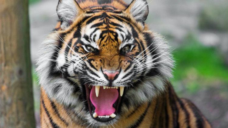 ۱۰ شیوه باور نکردنی که انسان ها توسط حیوانات کشته شده اند