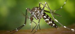اگر تعداد زیادی پشه بدن انسان را نیش بزنند، چه باید کرد؟