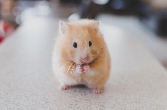 ۱۵ حقیقت جالب درباره همسترها که احتمالاً تا کنون نشنیده اید
