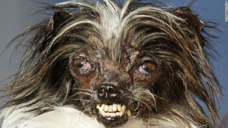 170622155718-02-ugly-dog-contest-preview-exlarge-169-w750