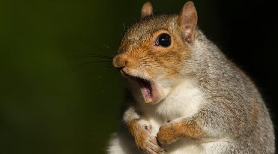 دانستنی های جالب و شگفت انگیز در مورد حیوانات که شاید نتوانید آن ها را باور کنید
