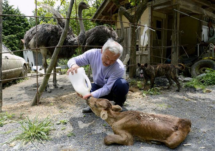 53805-fukushima-radioactive-disaster-abandoned-animal-guardian-naoto-matsumura-13-1000-7c7fc6a548-1484636084-w700