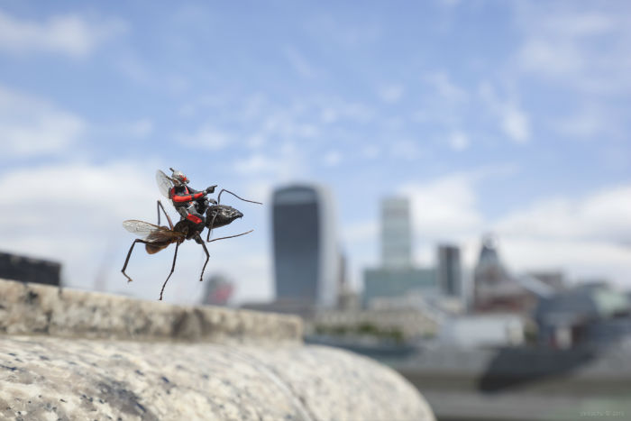 Ant-Man flying 1b - blog-w700