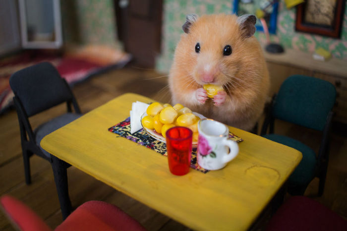 Crafted-miniature-town-for-HUNGRY-HUNGRY-HAMSTERS-online-series-5935d40f144a4__880-w700