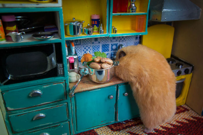 Crafted-miniature-town-for-HUNGRY-HUNGRY-HAMSTERS-online-series-5935d43594ac9__880-w700