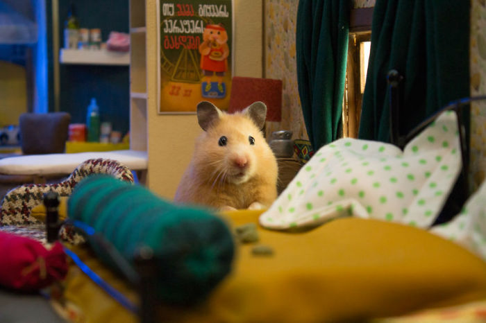 Crafted-miniature-town-for-HUNGRY-HUNGRY-HAMSTERS-online-series-5935d46a28263__880-w700