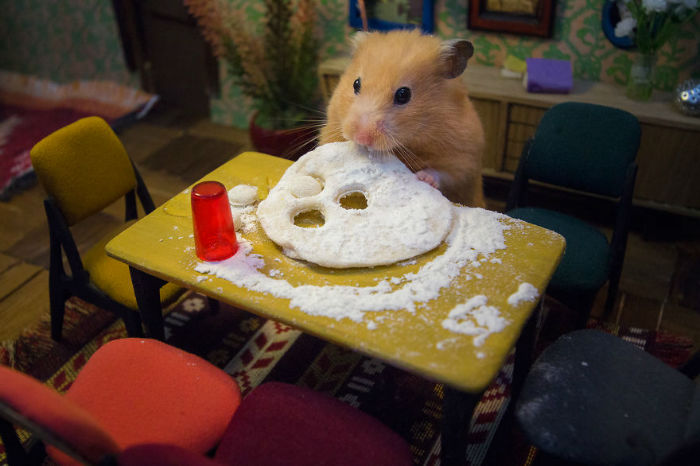 Crafted-miniature-town-for-HUNGRY-HUNGRY-HAMSTERS-online-series-5935d48660172__880-w700