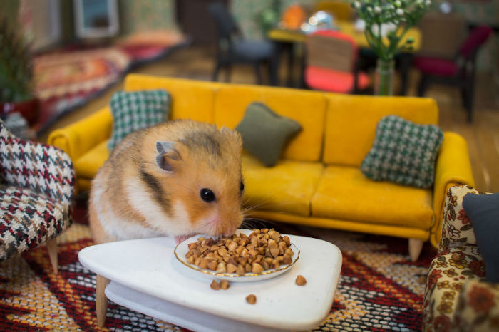 Crafted-miniature-town-for-HUNGRY-HUNGRY-HAMSTERS-online-series-5935d4a2557f9__880-w700