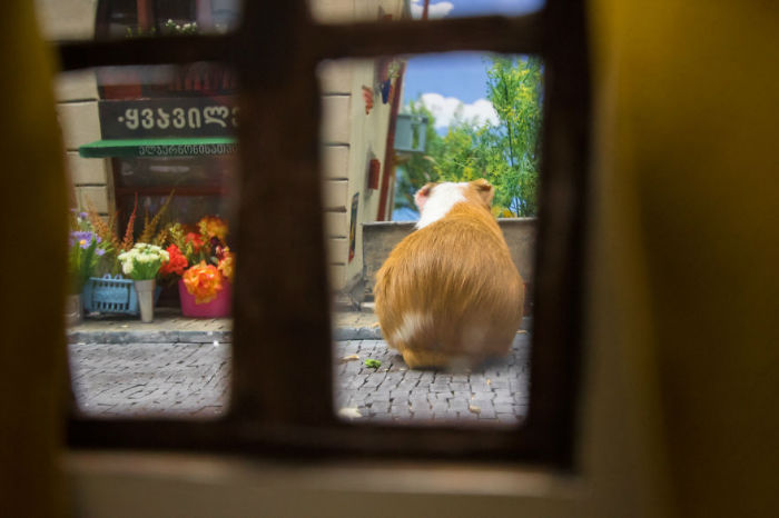 Crafted-miniature-town-for-HUNGRY-HUNGRY-HAMSTERS-online-series-5935d54b803bf__880-w700