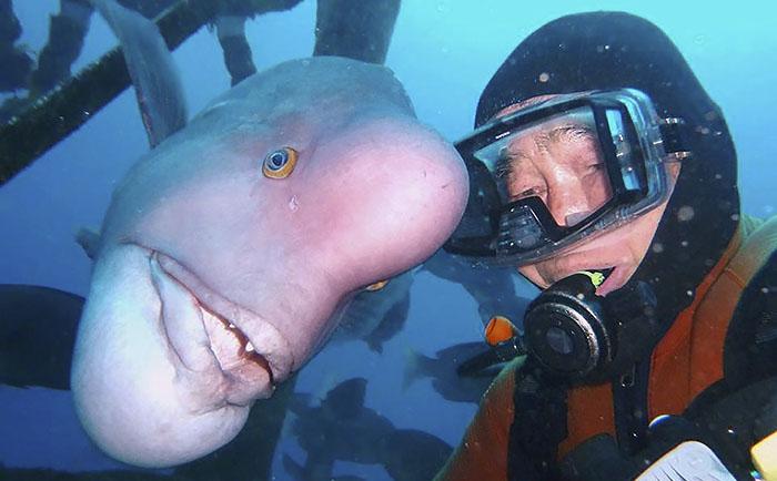 دوستی ۲۵ ساله شیرجه رو پیر ژاپنی با یک ماهی سفید در معبدی در زیر آب
