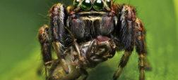 آیا می دانستید عنکبوت ها سالانه میلیون ها تن بیشتر از انسان ها گوشت می خورند؟!