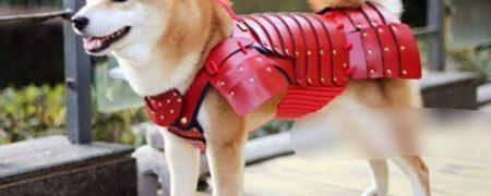 pet-dog-cat-armor-samurai-age-japan-7a-w700